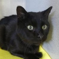 Chesbro… - Chesbro lived at St. Francis Animal Shelter from 2013 until he passed away in 2018. Chesbro liked everyone. Each morning he would run to his kennel because he was so excited to get his morning canned food. He was a blessing who brought joy to us all!