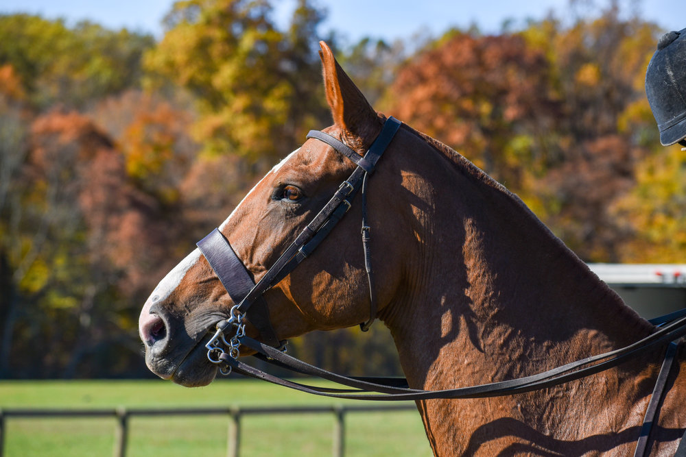 waffles-christina-mulqueen-pennsylvania-hunt-cup-side-saddle.jpg