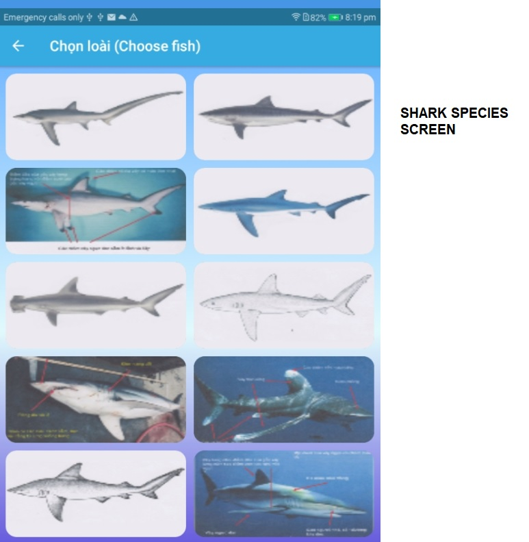 The species page. These are typical shark species from the Vietnam fisheries
