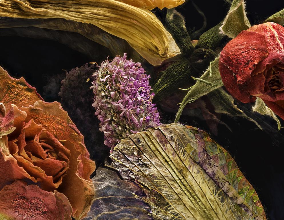 Iris Roses Seed Head 03072018