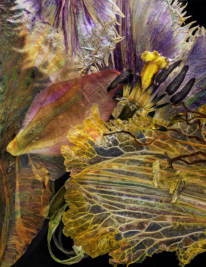 Iris Daylily Tulip 11112017