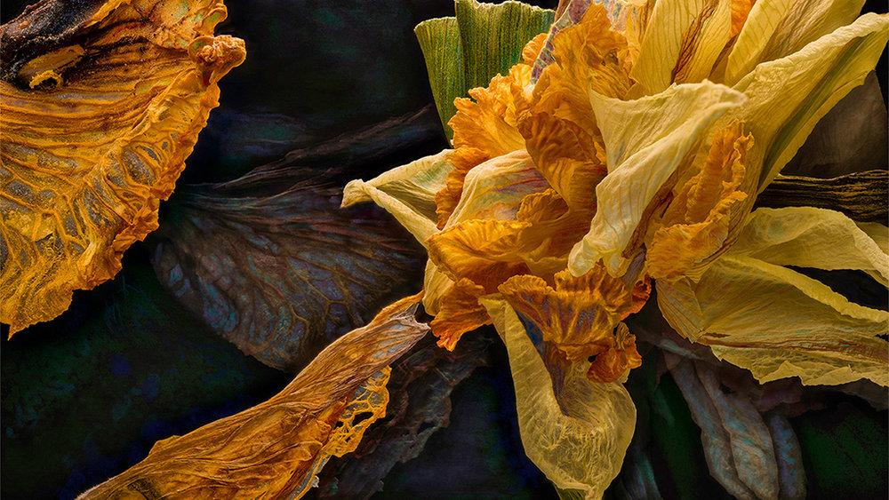 Daylily Daffodil 04232018