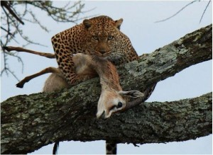 the-kill-predator-prey