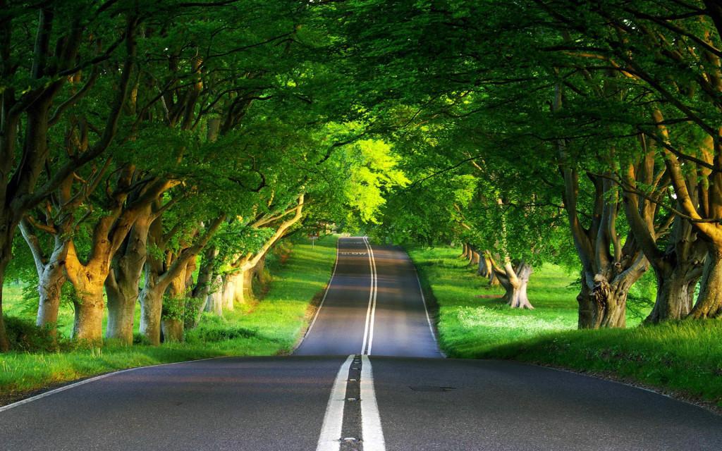 spring-green-road-landscape-high-definition-wallpaper-desktop-background-download