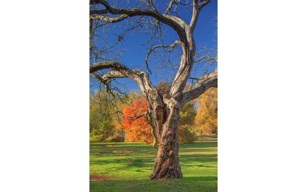 HS-All the trees__09W8582_6406-01.jpg