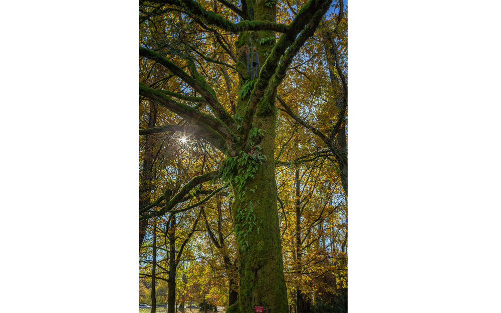 HS-All the trees__09W8958_6403-08.jpg
