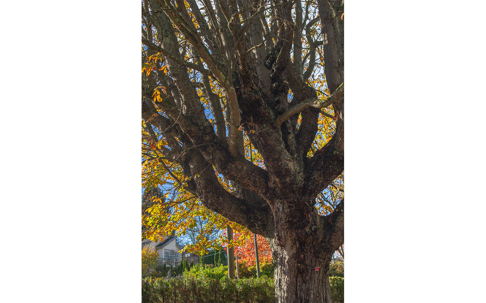 HS-All the trees__09W9153_6396-03.jpg