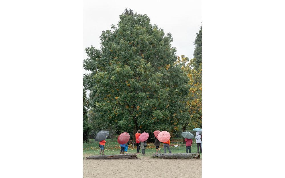 HS-All the trees__09W8106_6408-01.jpg