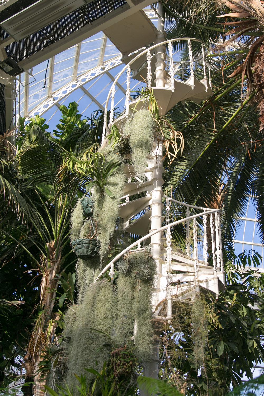 Sian-Graeme-Sefton-Park-Palm-House-Anneli-Marinovich-Photography-143.jpg
