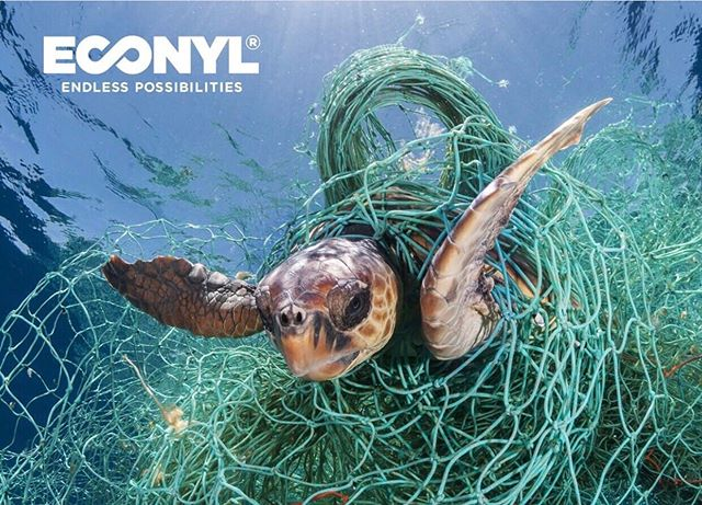 This is Nylla. 💙 She has been with @econylbrand since 2011 when it all began. Every day, she reminds us why sustainable fabric makes a difference: In ocean, it's easy for fish, turtles, & other marine animals to get stuck in ghost nets. With the help of the @healthyseas initiative, these deadly traps are recovered and then transformed – together with other discarded nylons – into the ECONYL® regenerated nylon that is in your Lotus Swim bikini.  Look good, do good. 🌊🌱💫♻️