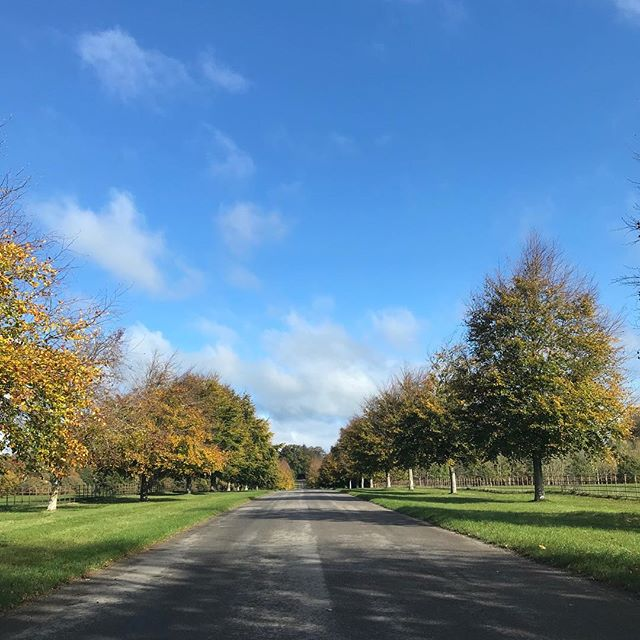 On the way up the drive of @thelarmertree today. A gorgeous crisp and very cold day! #streetfood #shepherdshut #mobilecatering #dorset #wiltshire