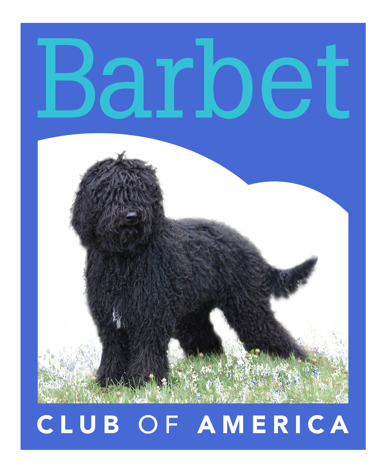 Barbet Club of America