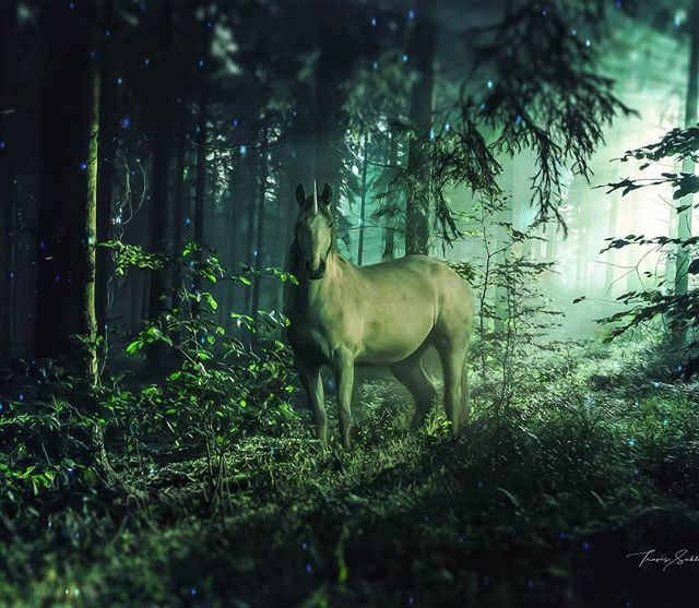 """Photo art """"The Sighting""""  My gf loves unicorns so ofcourse I had to make a picture for her.  Prints and full size image also available on schluterart.com  #art #photoart #digitalart #digitalartist #green#forrest #unicorn#horse#myth#sunrays #trees #instagood #instaart #photomanipulation #photography #freelance #prints #artprints #printsforsale #canvasart"""