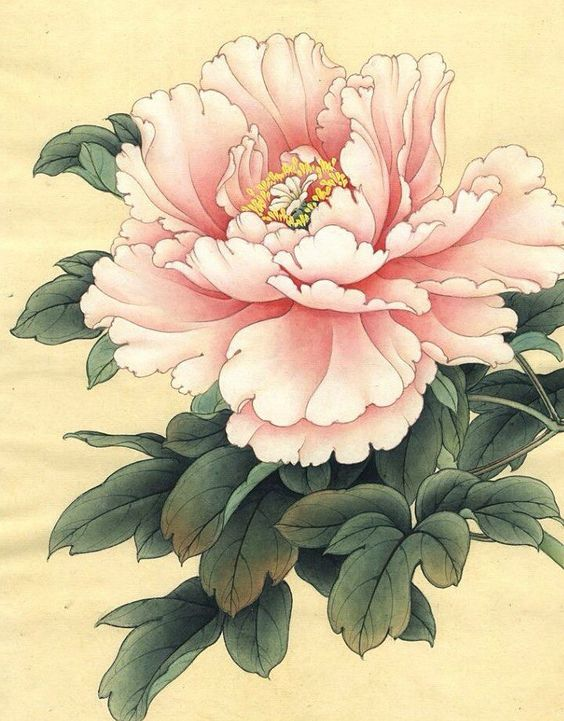 Gardeners from Asia to Europe have treasured peonies for centuries. - The peony is the national flower of China, representing wealth, beauty, and honor. It symbolizes spring, female reproduction, as well as peace. Widely cultivated throughout China and Japan for thousands of years, they became popular in Europe by the middle ages.