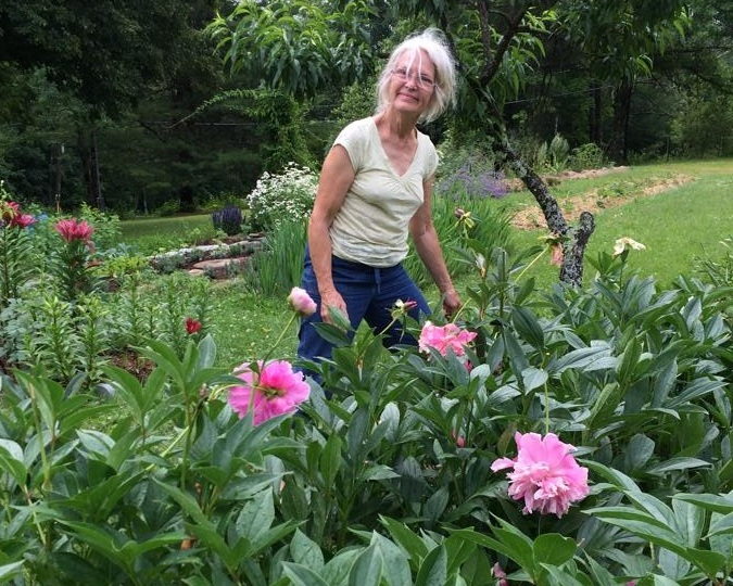Europeans planted peonies where they settled in the Americas. - Passed down to my grandmother who brought her mother's peonies from Nebraska to Pennsylvania, my mother has replanted peonies in her gardens from upstate New York to Massachusetts.