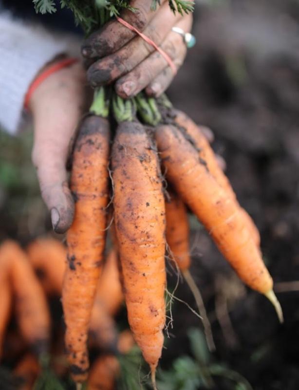 carrots+close.jpg