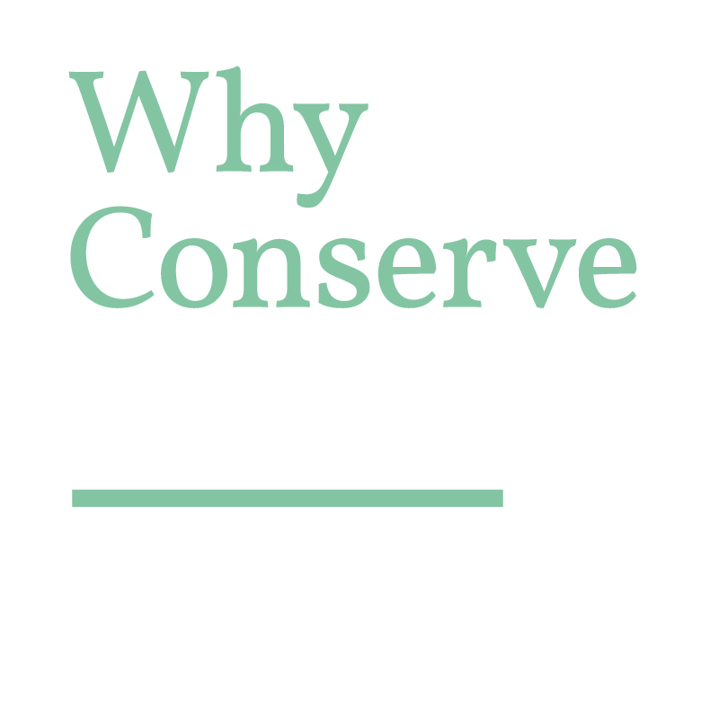 Why-Conserve_-Youtube-Icon.jpg