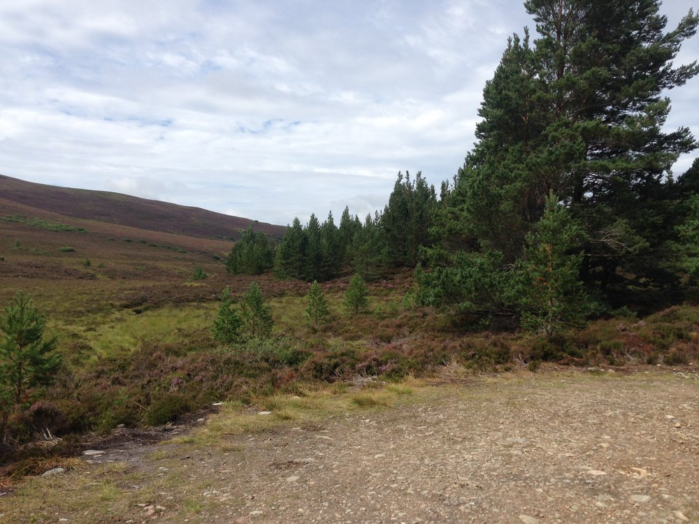 Reforestation is essential in achieving the climate change target of halting global warming at 1.5 °C. This extends beyond planting trees by hand, and rather allowing the natural regeneration of forest to occur by itself – you can see the younger trees to the left of the forest edge which were self-seeded rather than planted by man in the Scottish Highlands.