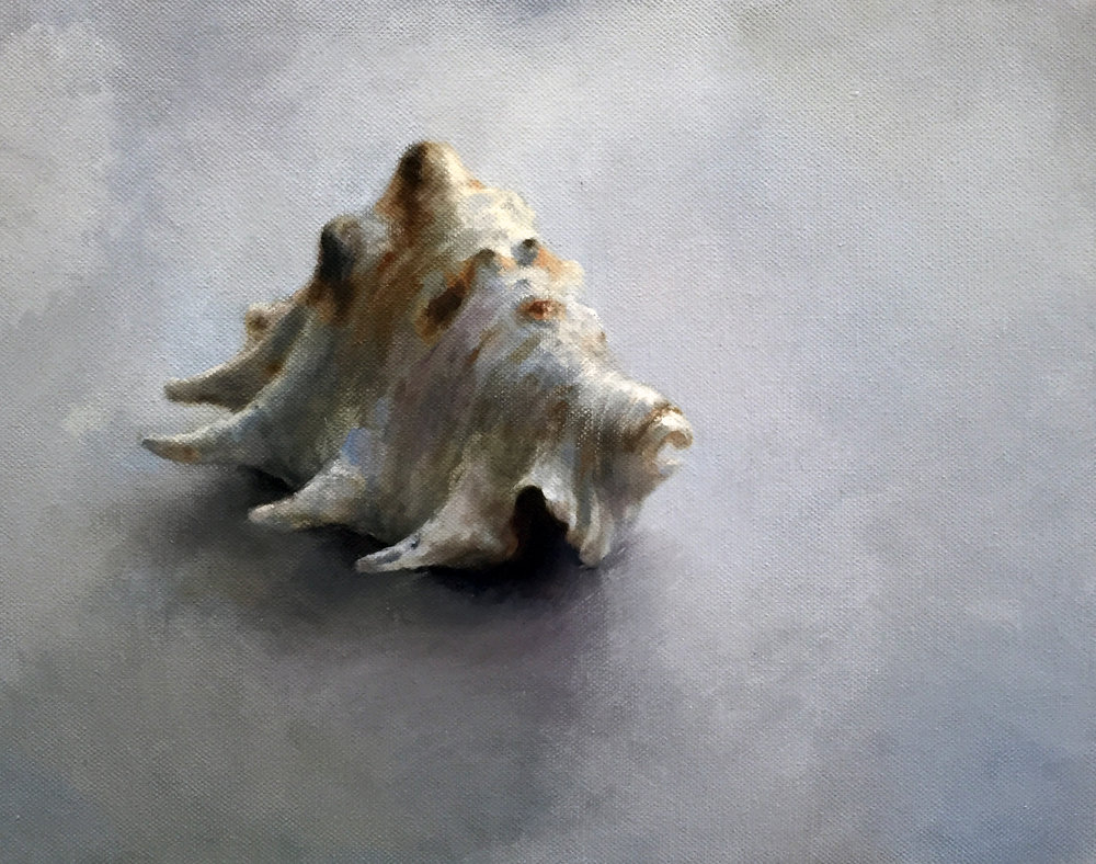 "SHELL  oil on canvas 11"" x 14"" 2015"