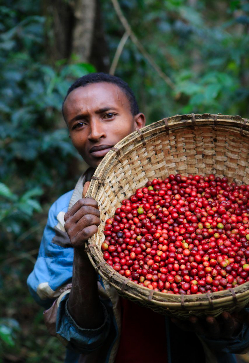 try coffee from all parts of Africa - COFFEE OF THE MONTH CLUB DELIVERING EXOTIC COFFEE TO YOUR DOOR