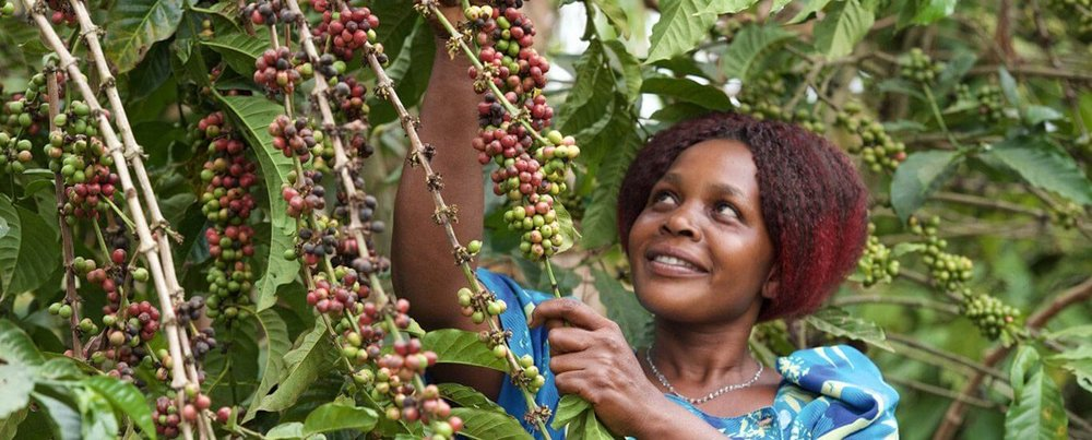 A tour of amazing african coffee - Think of us as your coffee tour guides, sendingyou amazing & exotic coffees you can'tfind anywhere online or on the shelf.