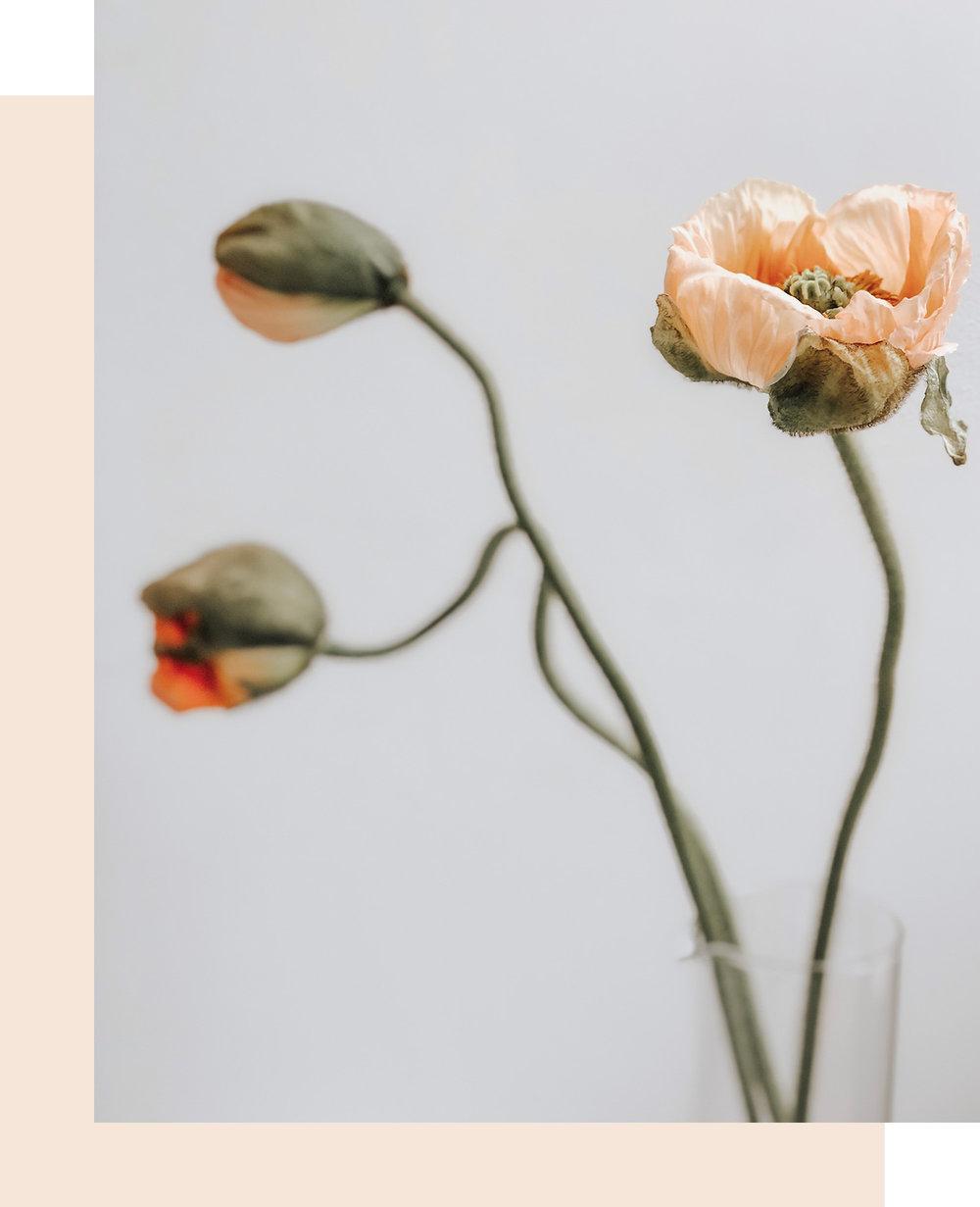 imagehighlighttall blomma.jpg