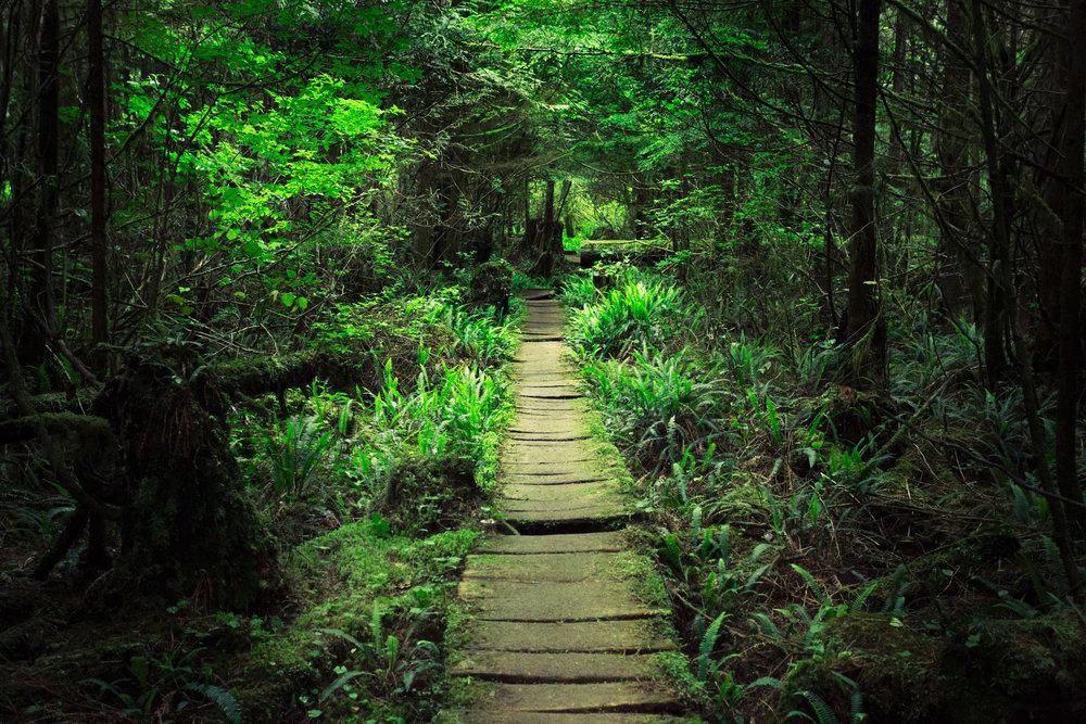 West-Coast-Trail-69.jpg
