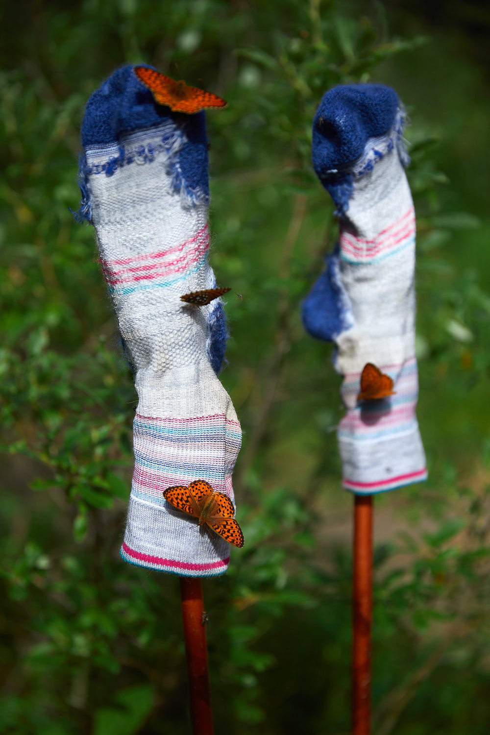 There were tons of butterflies at Porcupine Campground, Paige had setup her socks to dry and they were covered in just a few minutes.
