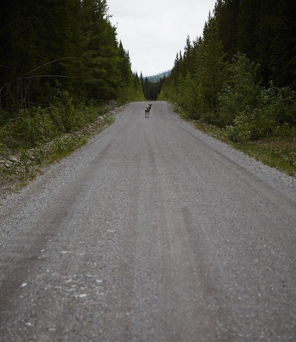 BC Cycle Tour 2018 18.jpg