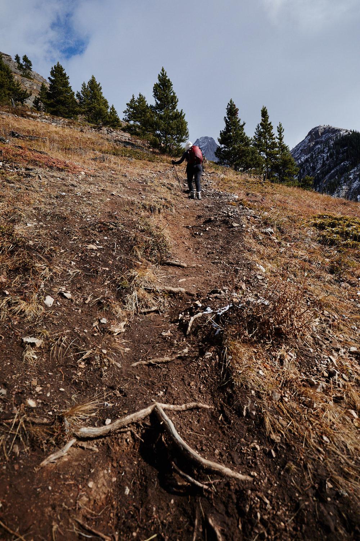 Grizzly Peak 4.jpg