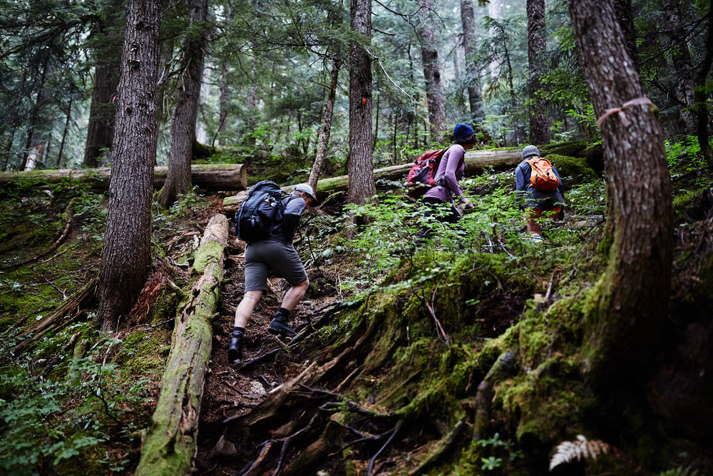 The first 500 meters of the trail leads up a steep switchback through the forest.