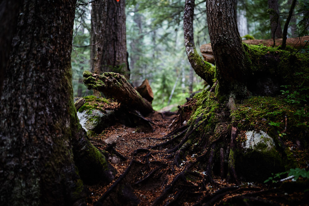 Brandywine Meadows and Mountain 2.jpg
