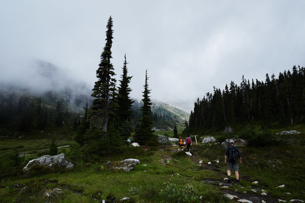 Once you break free of the trees you approach the alpine meadow.