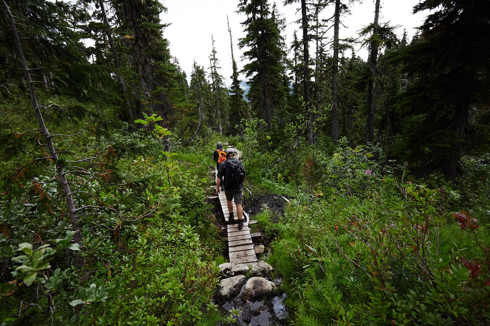 There are small wooden bridges that aid in crossing the wetter areas.