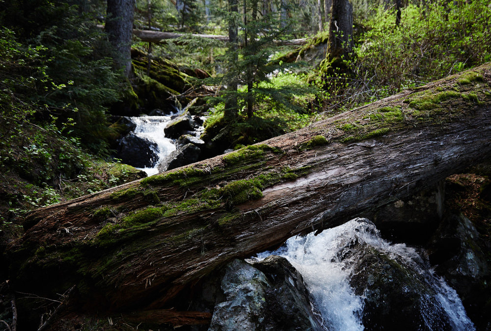 You're often close to a creek and later a large waterfall that originate from the lake above.