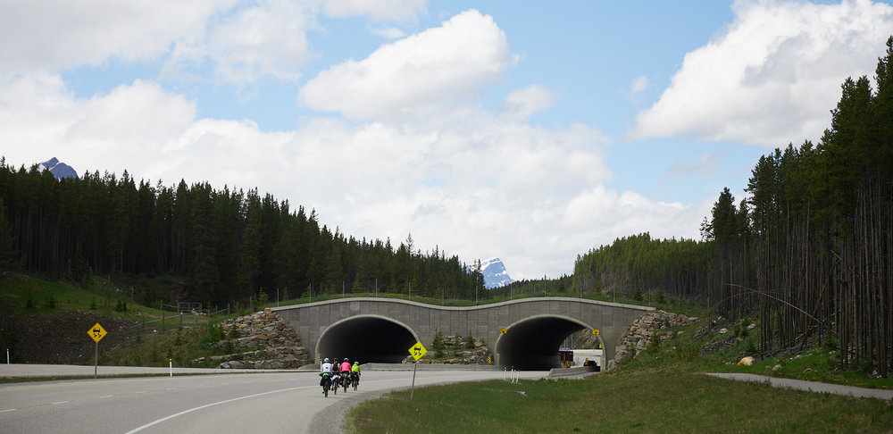 There are a number of natural overpasses that allow wildlife to cross the highway safely.