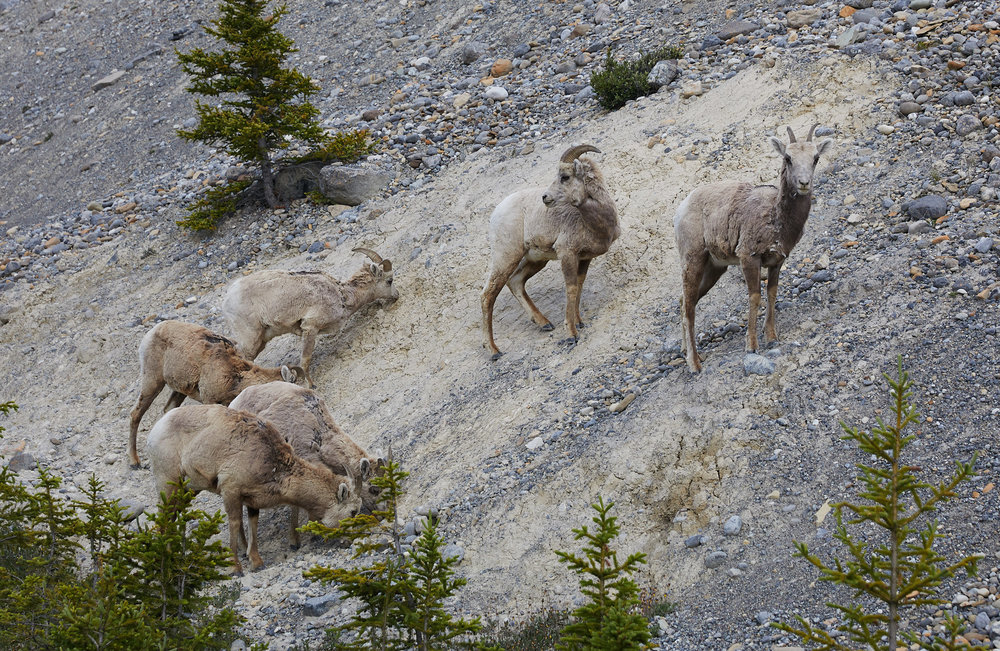 Icefields Parkway Cycle Tour - Lake Louise to Jasper 32.jpg