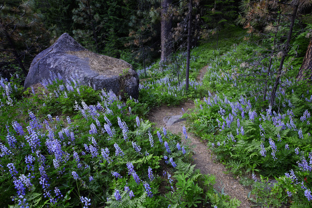 The next morning we woke up to find many wild flowers surrounding our campsite.