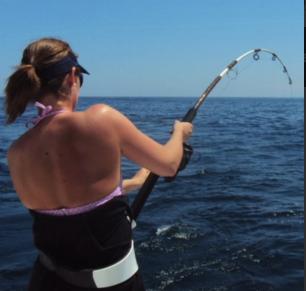 shark-fishing-3.png