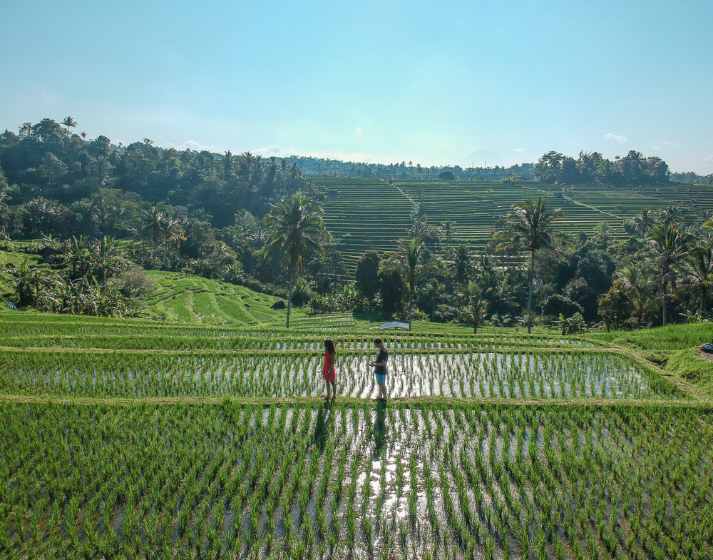 Jatiluwih Rice Terraces Bali We Moved Abroad