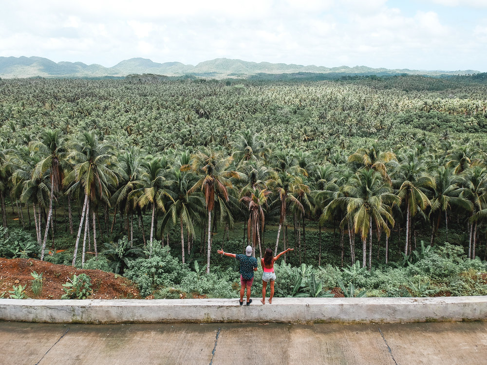 palm_fields_siargao.jpg