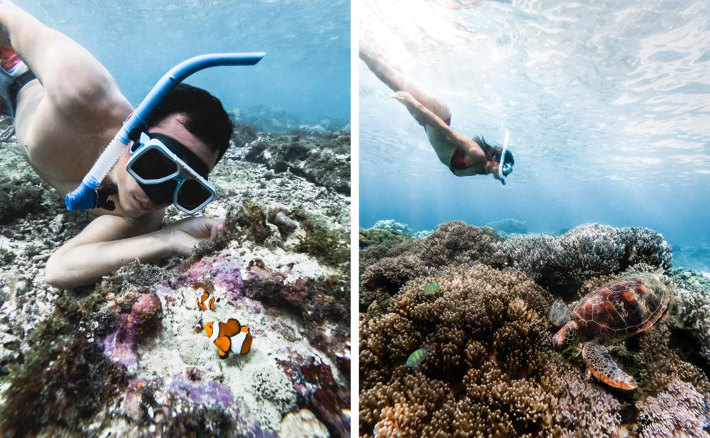 apo_island_snorkeling.png