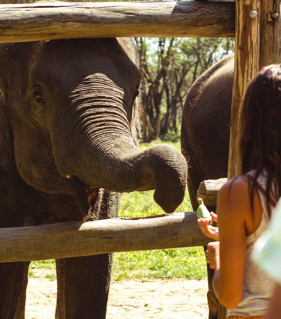 feeding_elephants_chiang_rai-901x1024.jpg