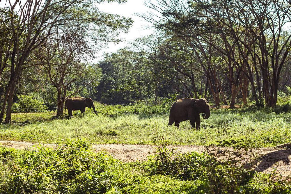 elephant_valley_chiang_rai.jpg