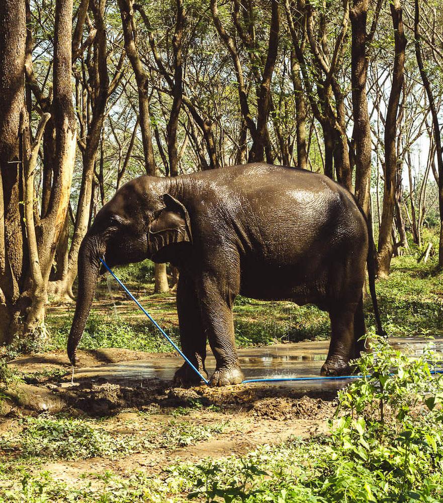 chiang_rai_elephant_sanctuary.jpg