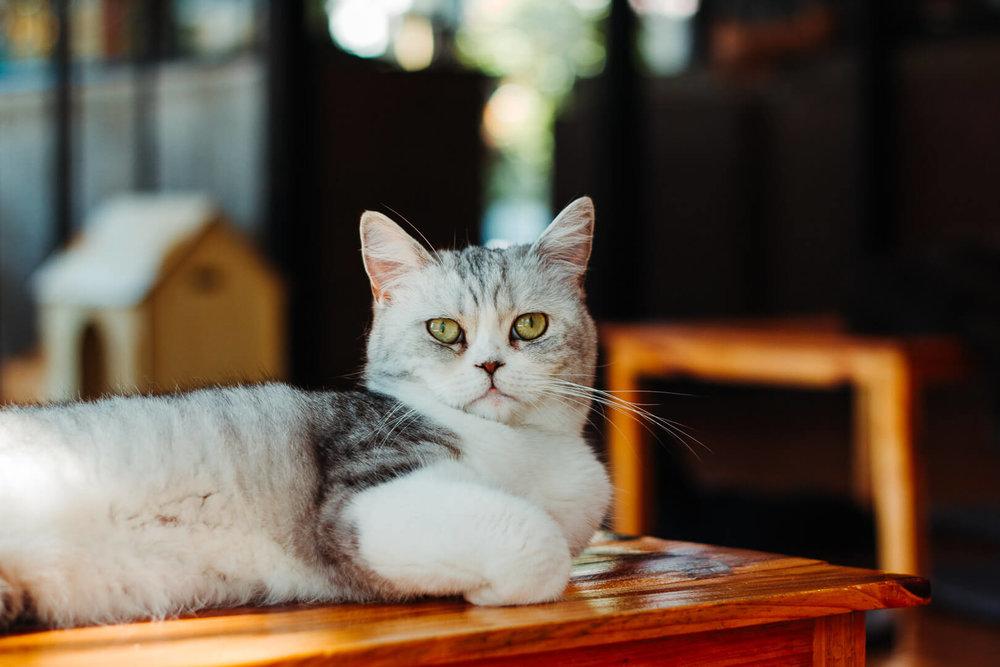 cat_n_a_cup.jpg