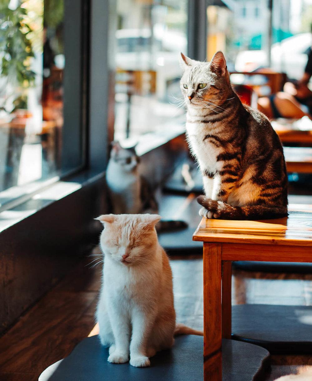 chiang_rai_cat_cafe.jpg