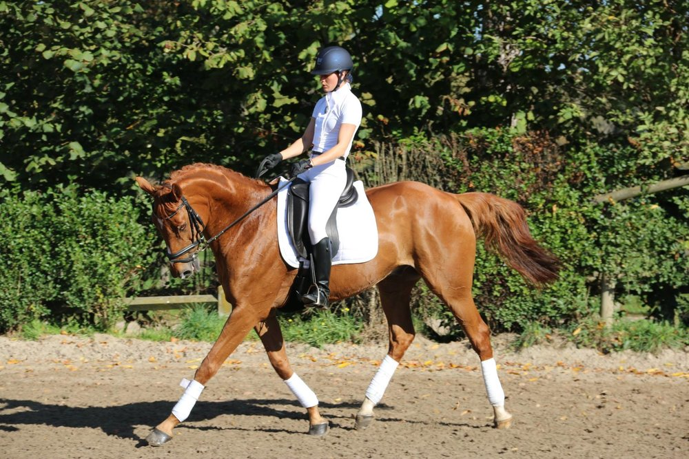 Le dressage - Le dressage est la base de l'équitation, nécessaire dans l'apprentissage de toutes autres disciplines équestres. Il consiste à faire évoluer les chevaux afin de montrer l'élégance de leurs mouvements et leur facilité d'emploi. Il juge également de la qualité de l'échange entre le cavalier et son cheval. Du niveau débutant « Galop 1 » au niveau confirmé « Galop 7 », le cavalier progresse selon son rythme et le niveau d'enseignement qu'il suit.