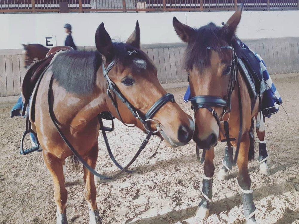 LES COURS DOUBLE PONEY - Les cours Double Poneys sont dispensés selon le niveau des cavaliers mais aussi de leur taille.Les niveaux se décomposent en 4 sections : Galop1, Galop 2, Galop 3.4 et Galop 4.5.Ils acquièrent alors une réelle autonomie et travaillent les techniques de dressage et d'initiation obstacle.Pour les cavaliers Galop 3.4 et 4.5, 3 concours d'obstacles sont organisés pendant la saison. Ils permettent aux cavaliers d'enchaîner un parcours d'obstacles et de s'initier aux réelles conditions de concours (jury, classement et récompenses).Notre cavalerie est composée de poneys de taille B (1,30m), C (1,40m) et D (1,48m).