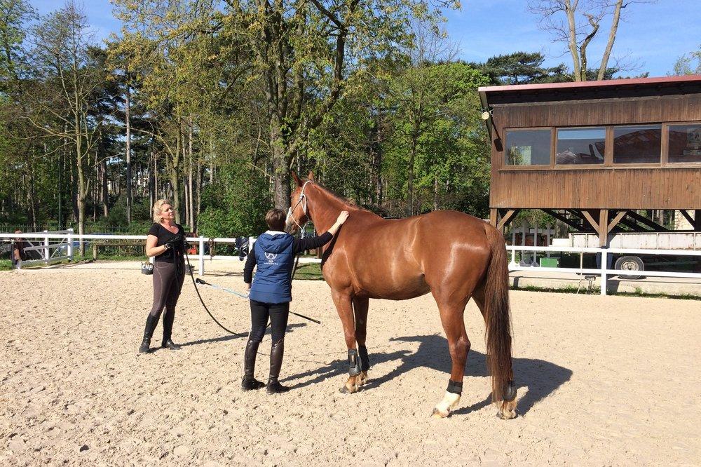 L'éthologie - Centrés sur le comportement du cheval et la relation de confiance et de respect, les savoirs éthologiques s'adressent aux cavaliers souhaitant approfondir leurs connaissances du cheval en tant qu'animal.La SEP s'associe à la FFE qui conçoit l'équitation éthologique comme une approche du cheval basée sur la confiance et le respect. Ce point de vue revalorise la relation entre l'homme et le cheval et réintègre le travail à pied.Stéphanie Briet, diplômée BFEE 1 et 2, vous fait découvrir la pratique de l'équitation éthologique.